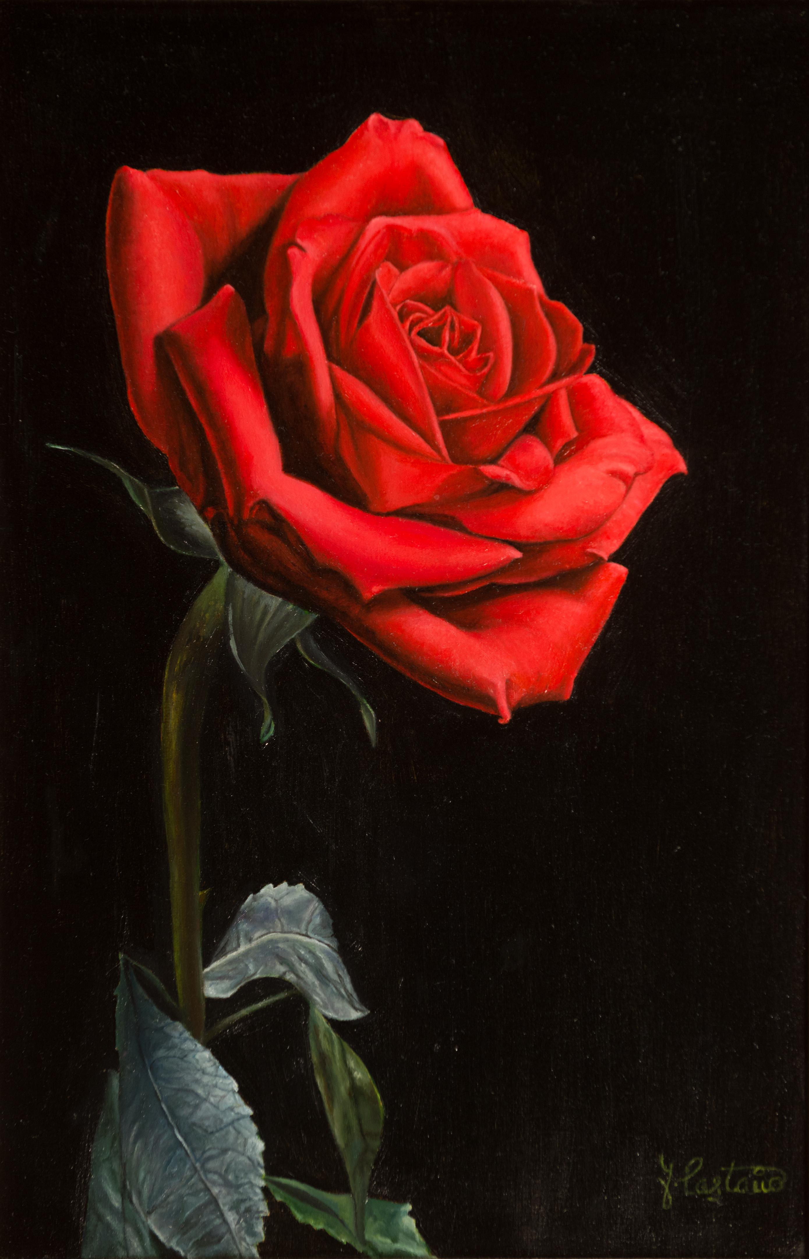 Rosa Roja Fondo Negro Pintores Solidarios
